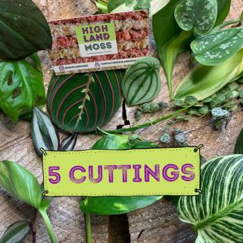 Mystery Cuttings Box – 5 cuttings from a range of beautiful plants Cuttings cuttings