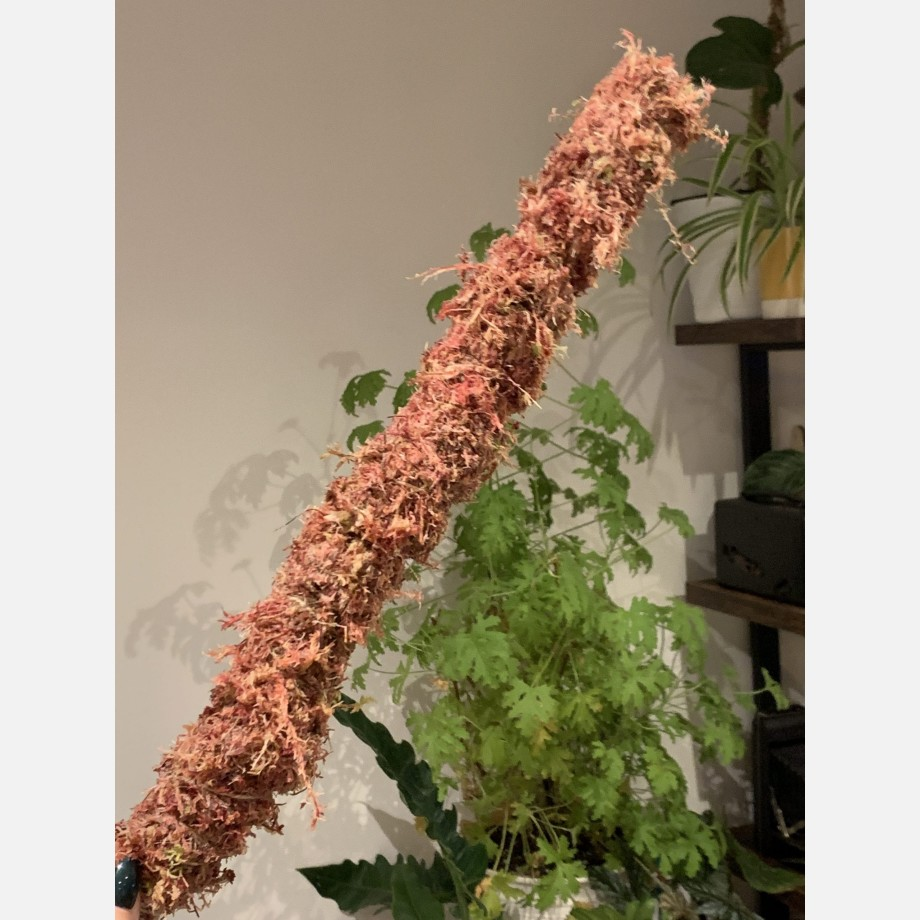 PINK Moss Pole Made with Moss 10
