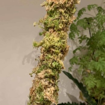 CLASSIC brown/green Moss Pole Made with Moss