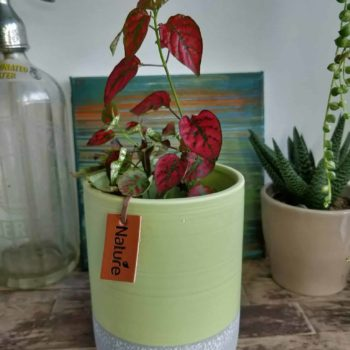 Tall green planter for pots up to 10cm Plant Accessories 10cm planter