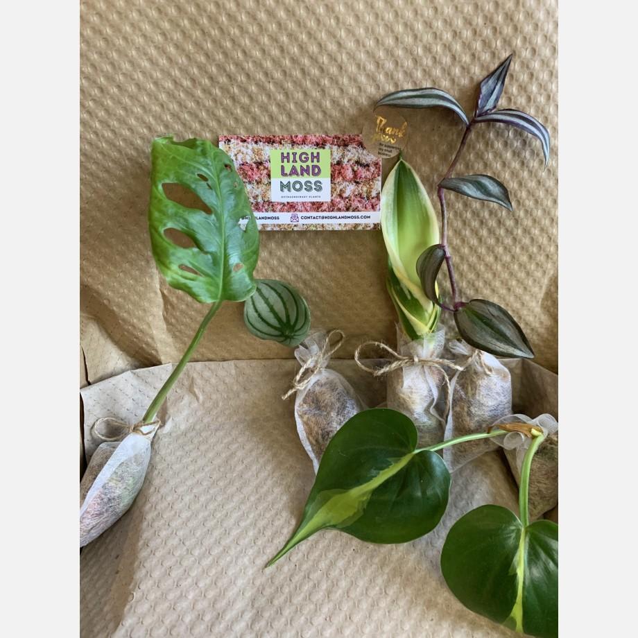 Mystery Cuttings Box – 5 cuttings from a range of beautiful plants Cuttings cuttings 5