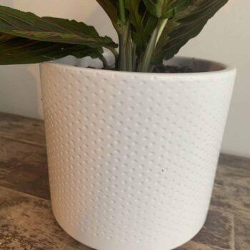 White planter with subtle dot design for up to 12cm pots Plant Accessories 12cm planter