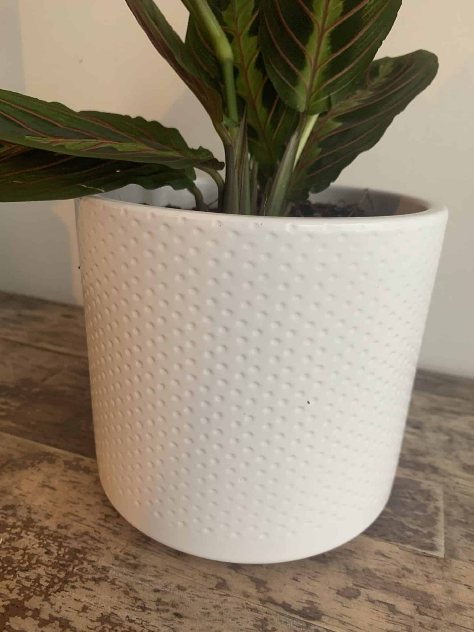 White planter with subtle dot design for up to 12cm pots