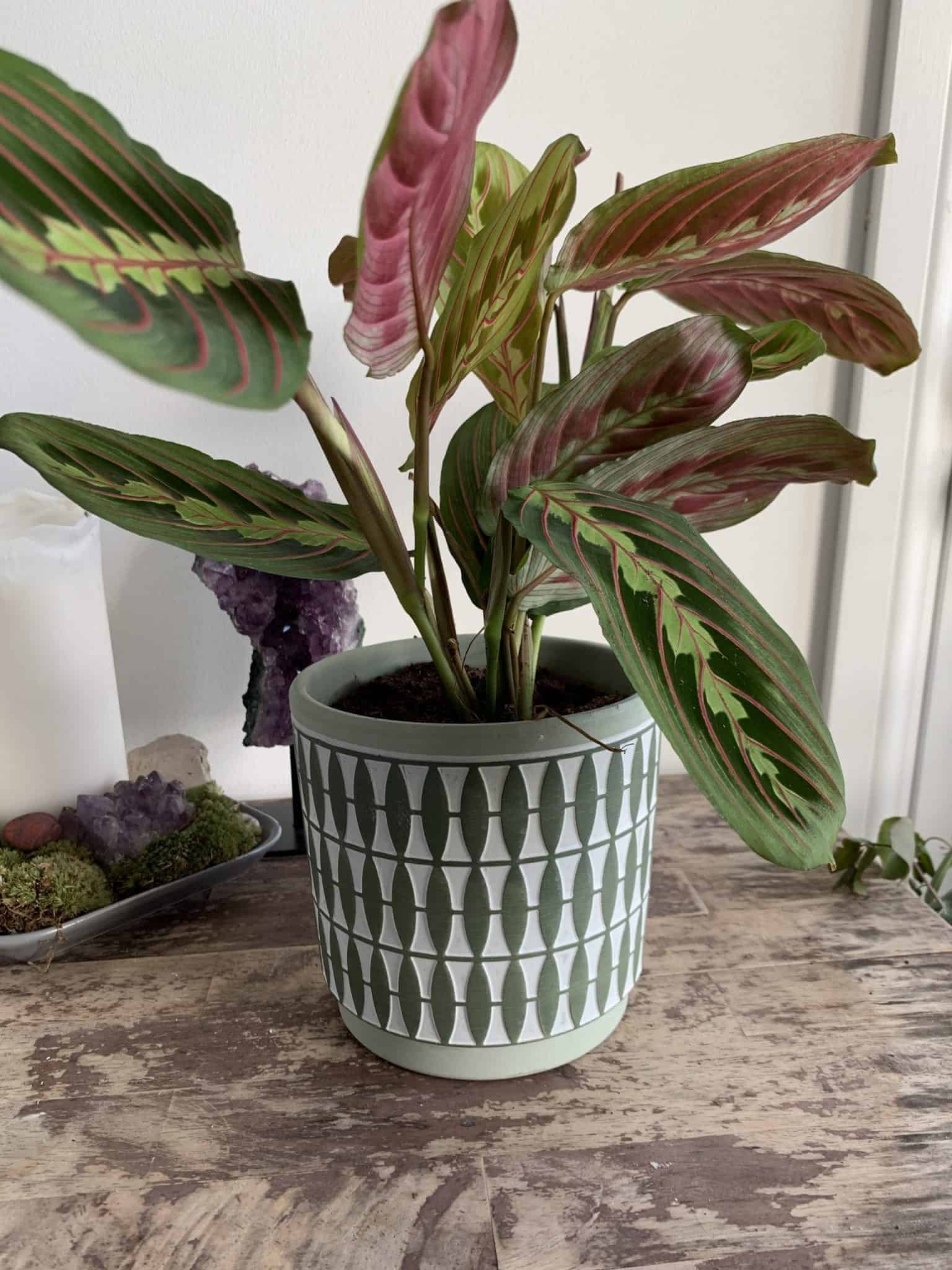 Diamond Planter for 12cm pots   Green   Grey   Mustard