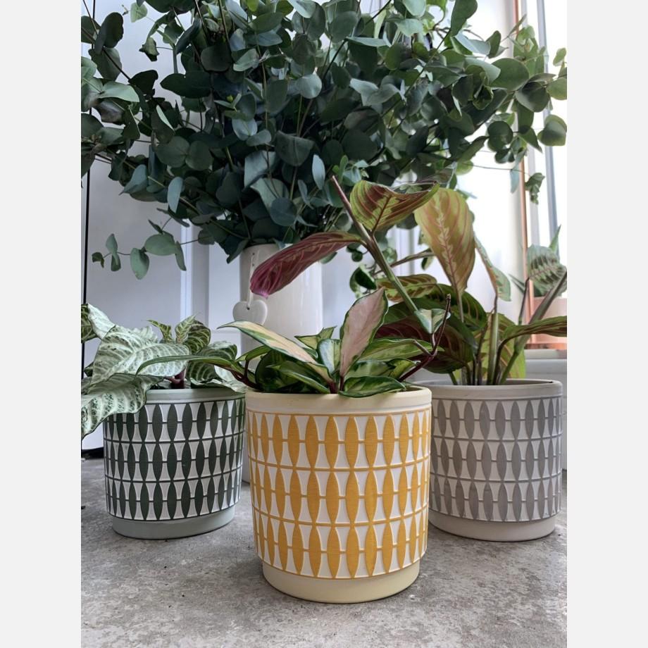 Diamond Pattern Planter for 12cm pots   Green   Grey   Mustard