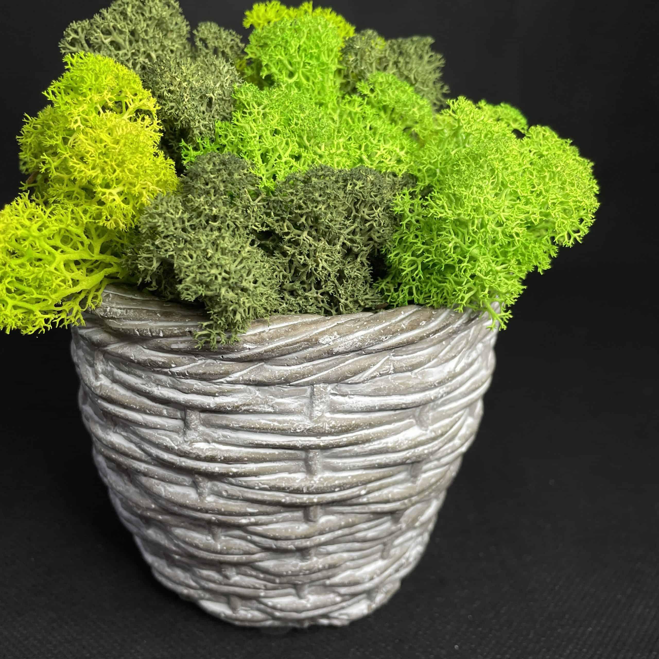 Preserved Moss Woven Style Pot | Green Mix Reindeer Moss