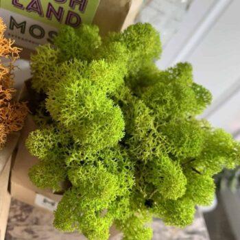 Preserved Reindeer Moss – Spring Green – 25g Made with Moss Green
