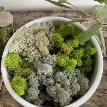 Preserved Reindeer Moss – Spring Green Made with Moss Green 2