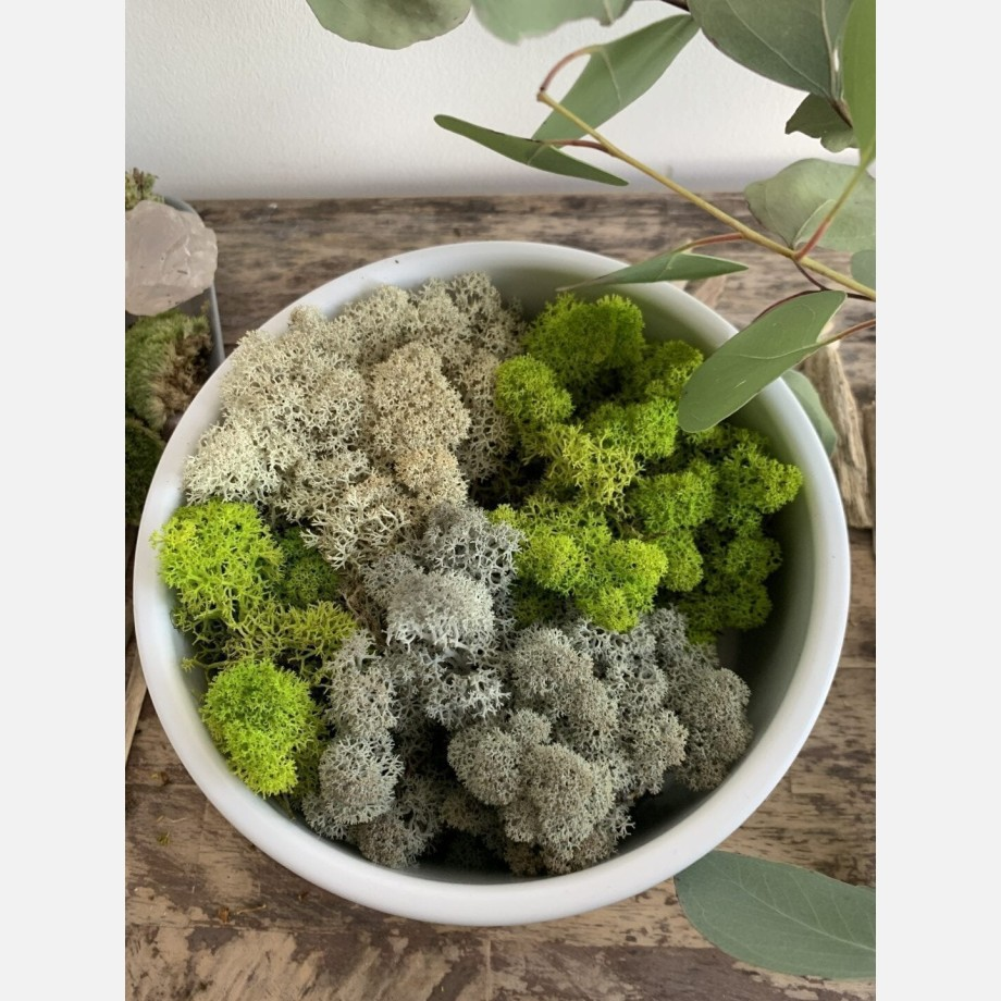 Ripper Productions – Preserved Moss – 1.5kg Ice Blue | 1.5kg Bordeaux | 100g Autumn | 100g Russet Made with Moss Green 5