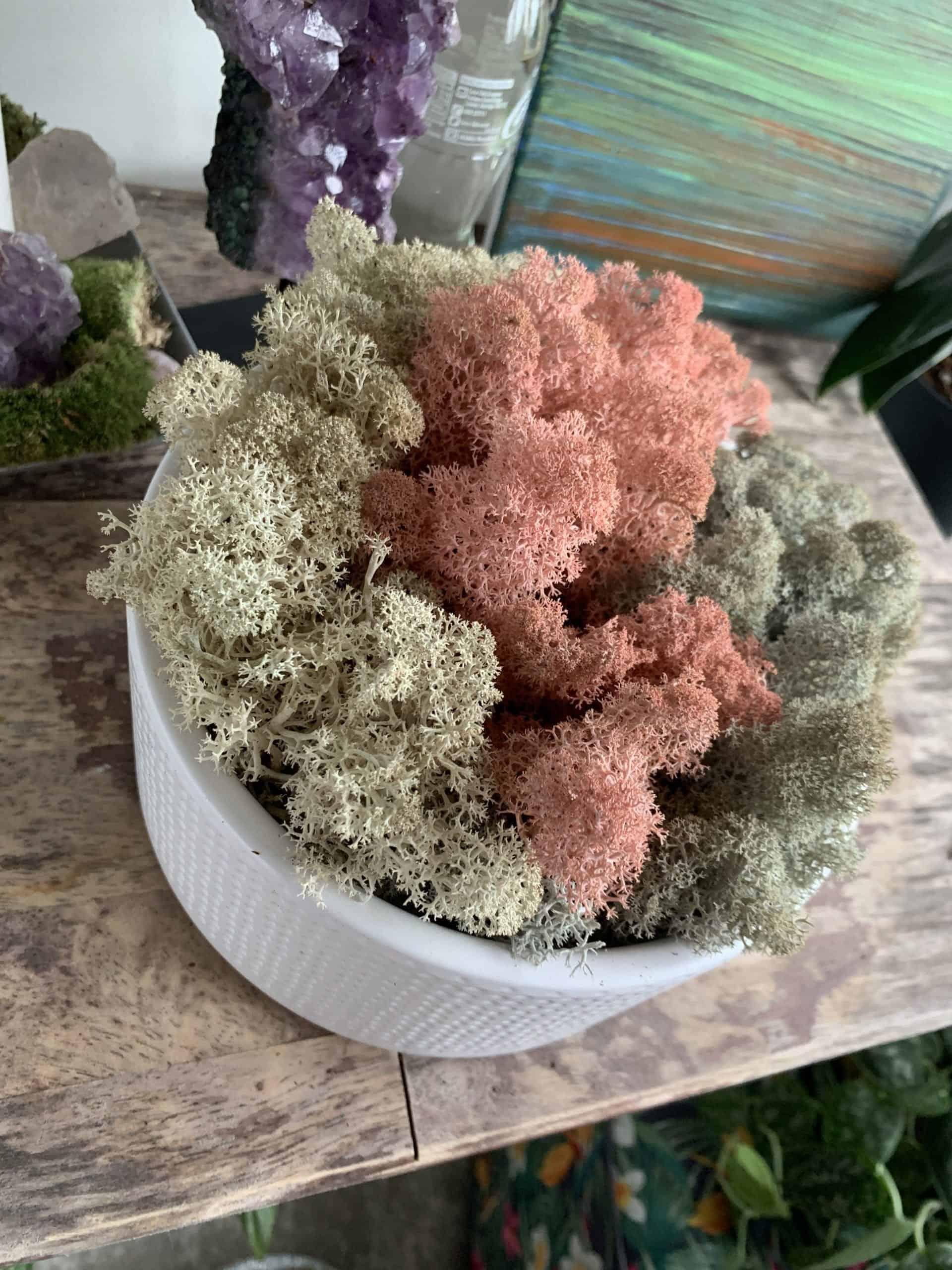 Preserved Moss Bowl 'Candy Floss Dream'   18.5cm