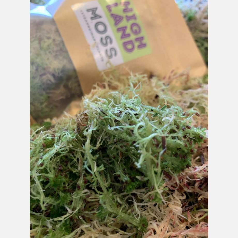 Fresh sphagnum moss in classic green/brown Fresh Moss green moss 3