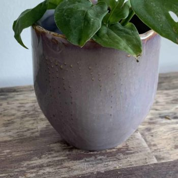 Purple Grey Mini Pot 6cm Plant Accessories 6cm planter