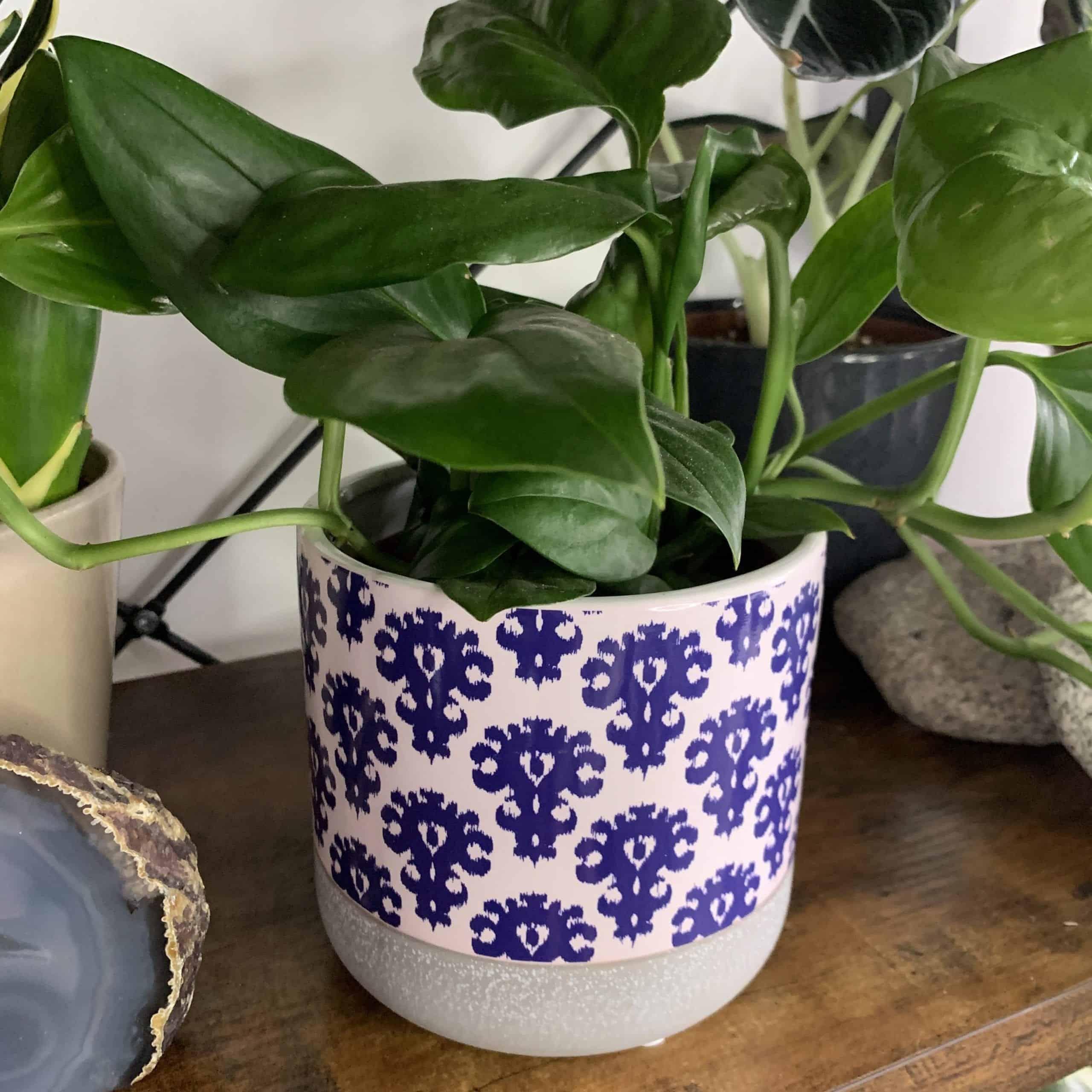 Blue pattern planter 12cm diameter