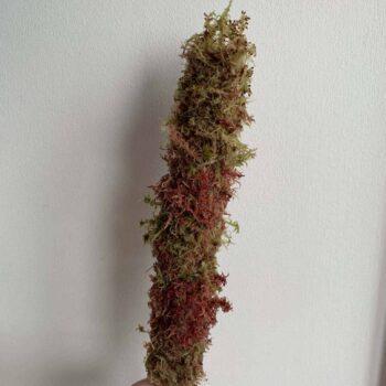 MINI Natural Moss pole 30cm Made with Moss moss pole 2