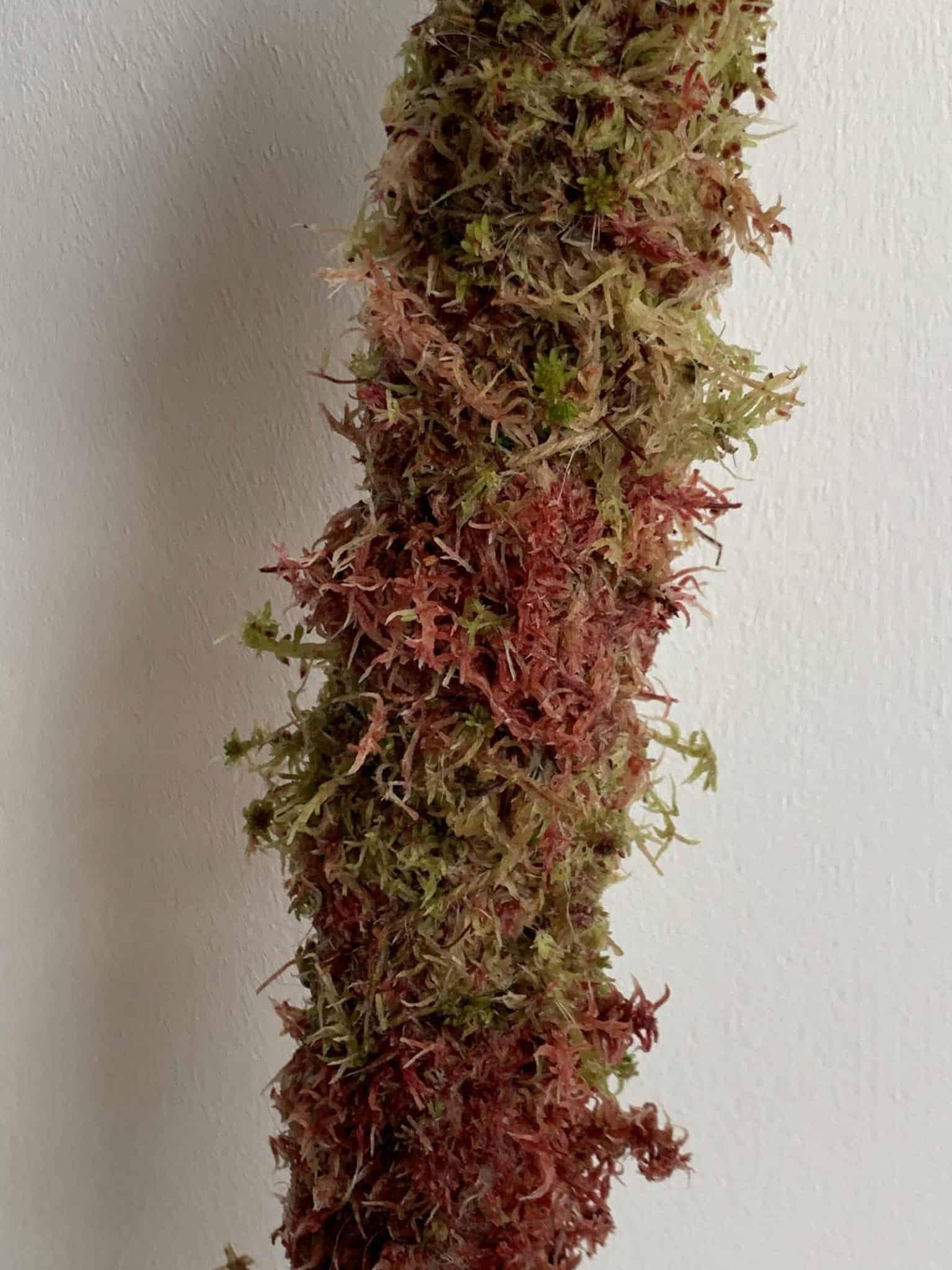 MINI Natural Moss pole 30cm - Mixed