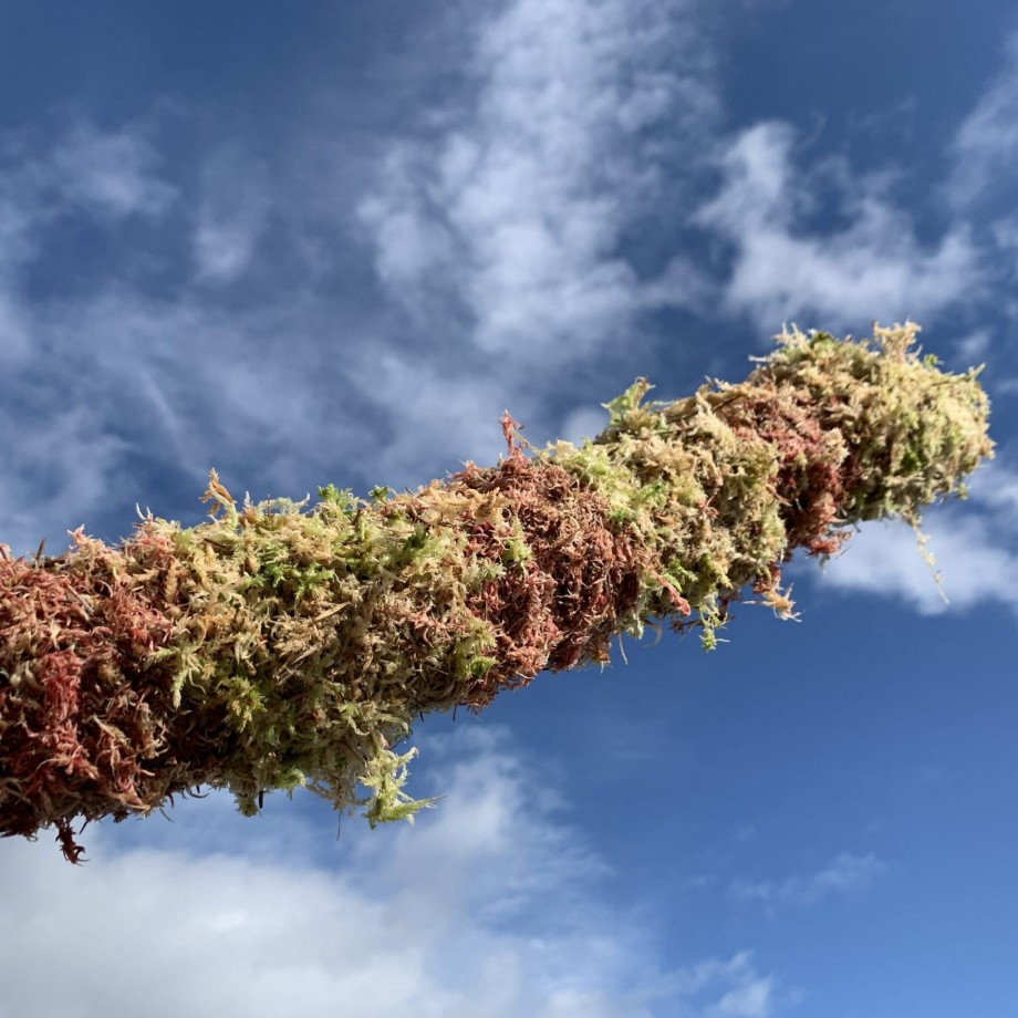 MIXED Green and Pink Moss Pole Made with Moss 5