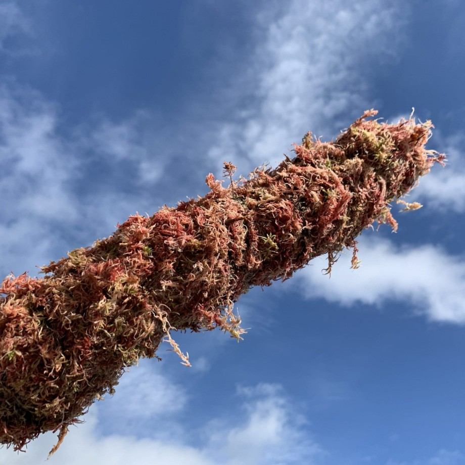 PINK Moss Pole Made with Moss 4
