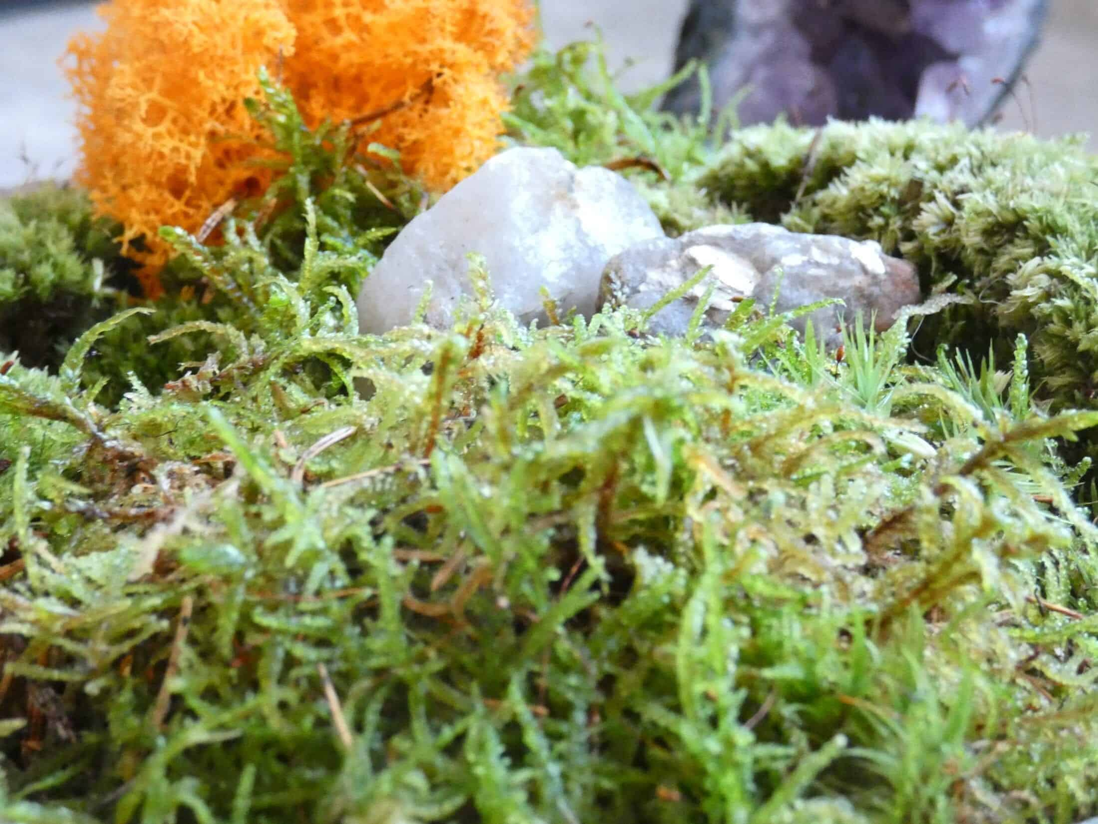 Live Moss Bowl 'The Wee Scotty' | 19cm