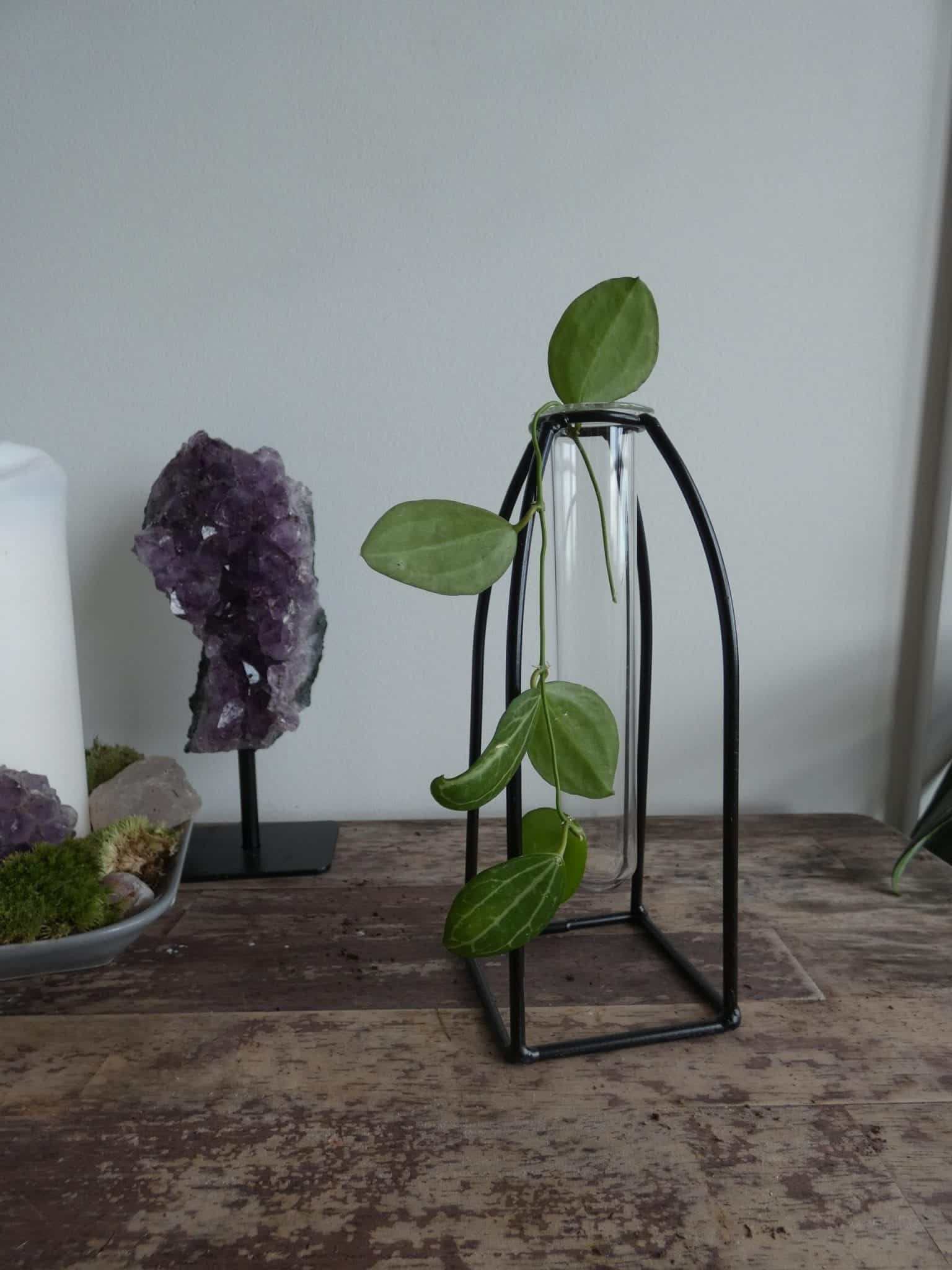 Propagation station stands in two sizes | Plus FREE mystery cutting - Small 18cm