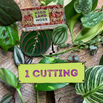 Single Mystery Cutting Box – 1 cutting from a range of beautiful plants Cuttings cuttings