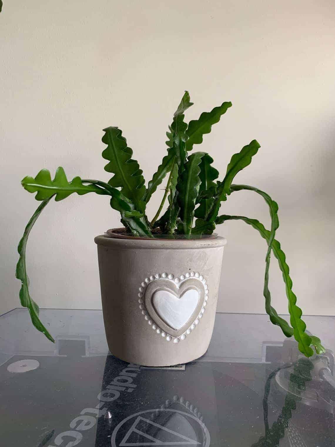 Heart Planter for 10cm pots