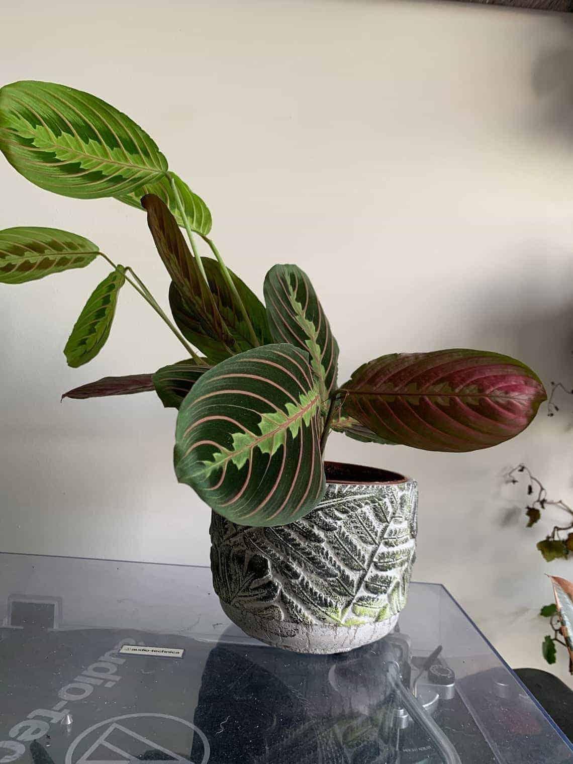 Leaf design planter for 12cm pots