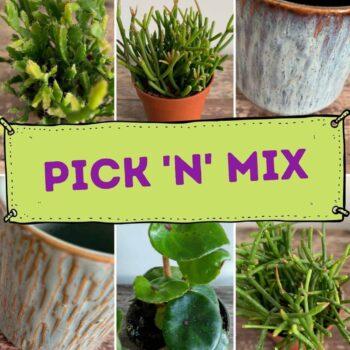 Pick N Mix Pick N Mix Box 4