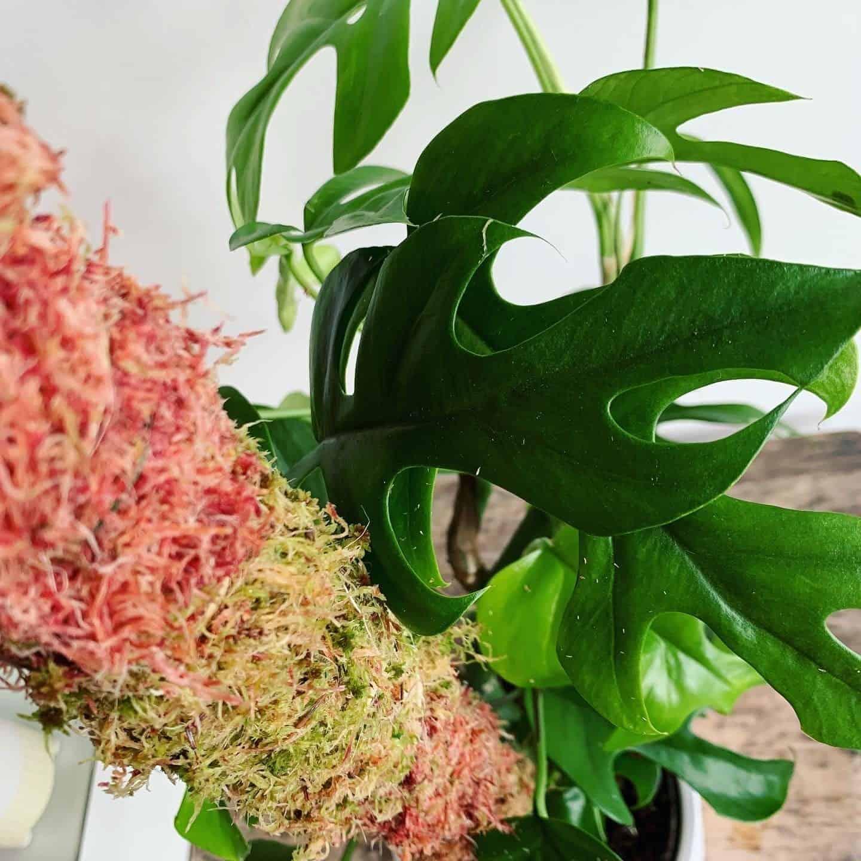 minima with mixed moss pole