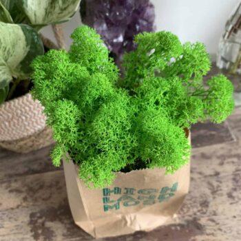 Preserved Reindeer Moss – Super Green – 25g Made with Moss Green