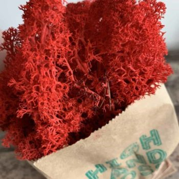 Preserved Reindeer Moss – Red – 25g Made with Moss Green