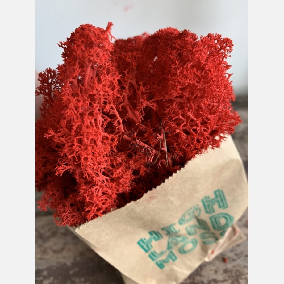 Preserved Reindeer Moss - Red - 25g
