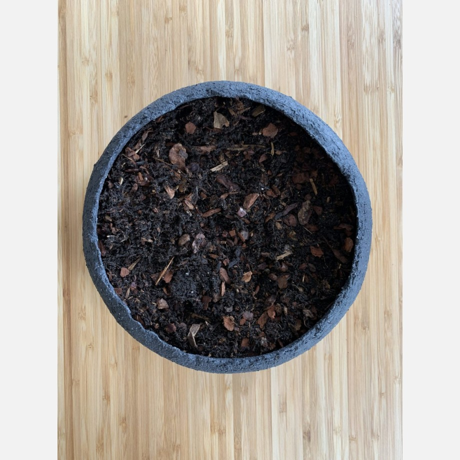 Soil Mix for Moss Bowl