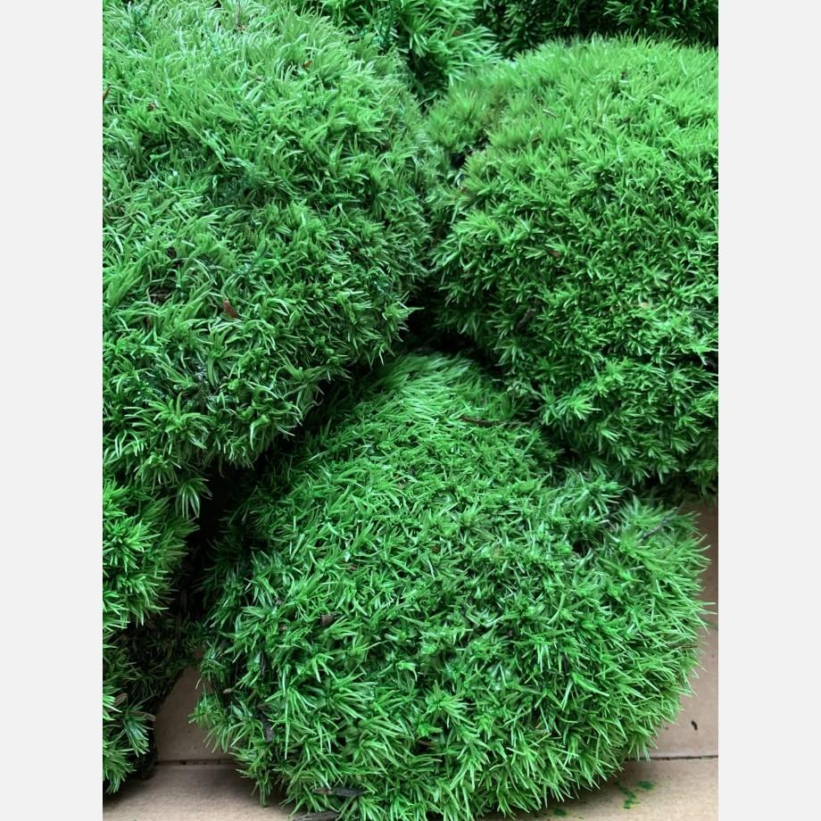Preserved Green Cushion Bun Moss Made with Moss bun moss 7