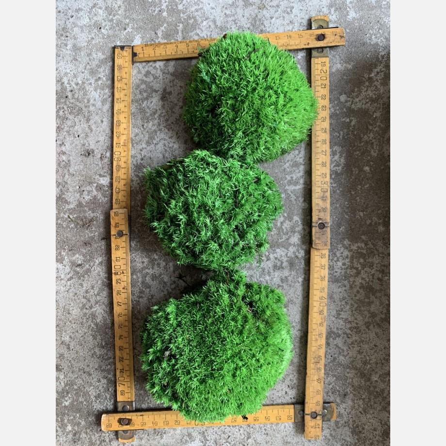 Preserved Green Cushion Bun Moss Made with Moss bun moss 6