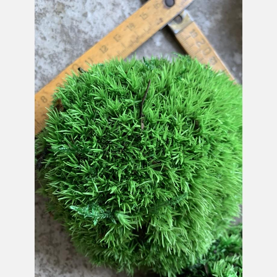 Preserved Green Cushion Bun Moss Made with Moss bun moss 5