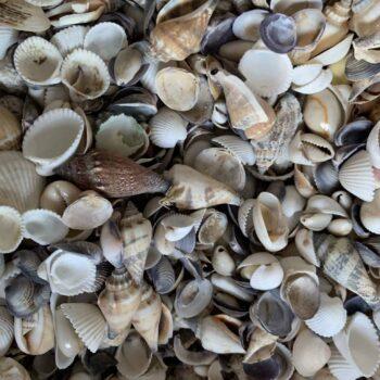 Shell Mix 25g Decorations shell mix