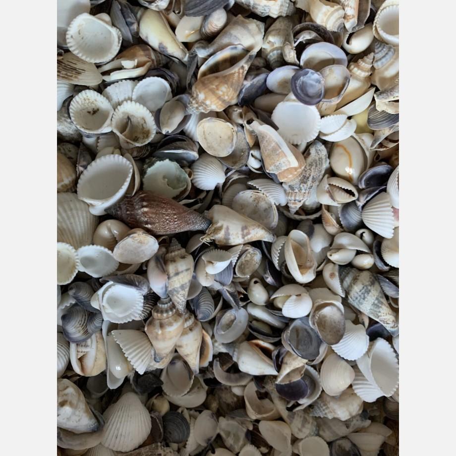 Shell Mix 25g