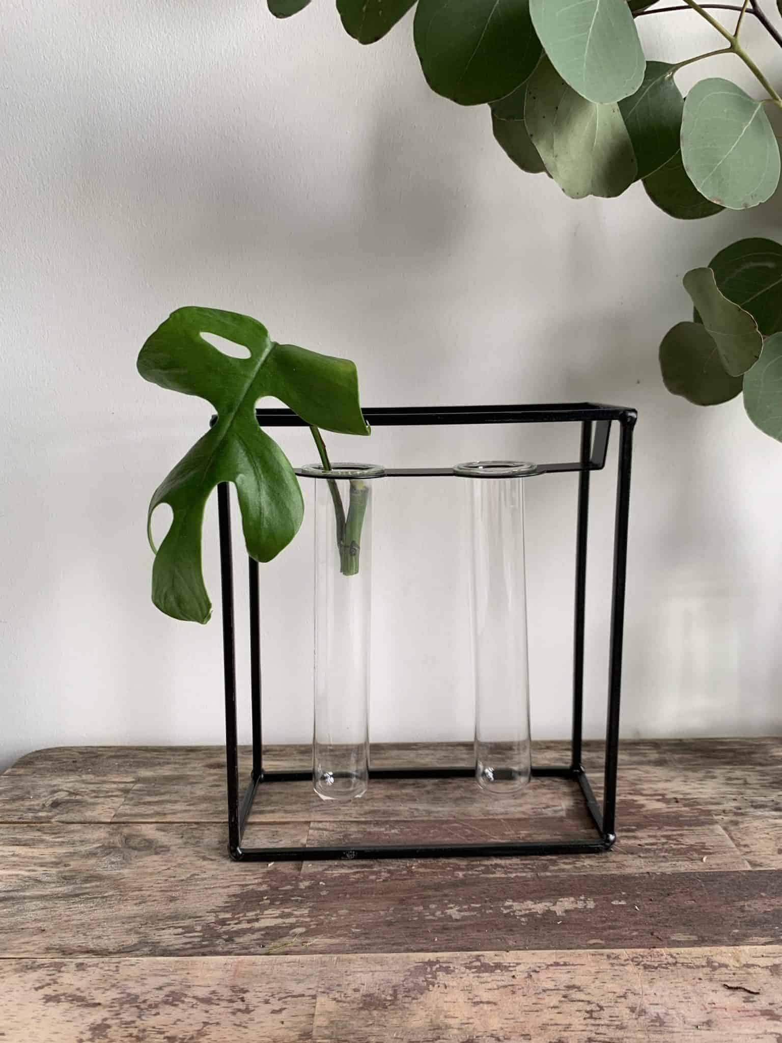 Black Metal Double Propagation Station + FREE mystery cutting