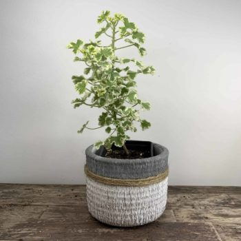 Grey, White and Jute planter for up to 9cm pots Plant Accessories 9cm planter 2