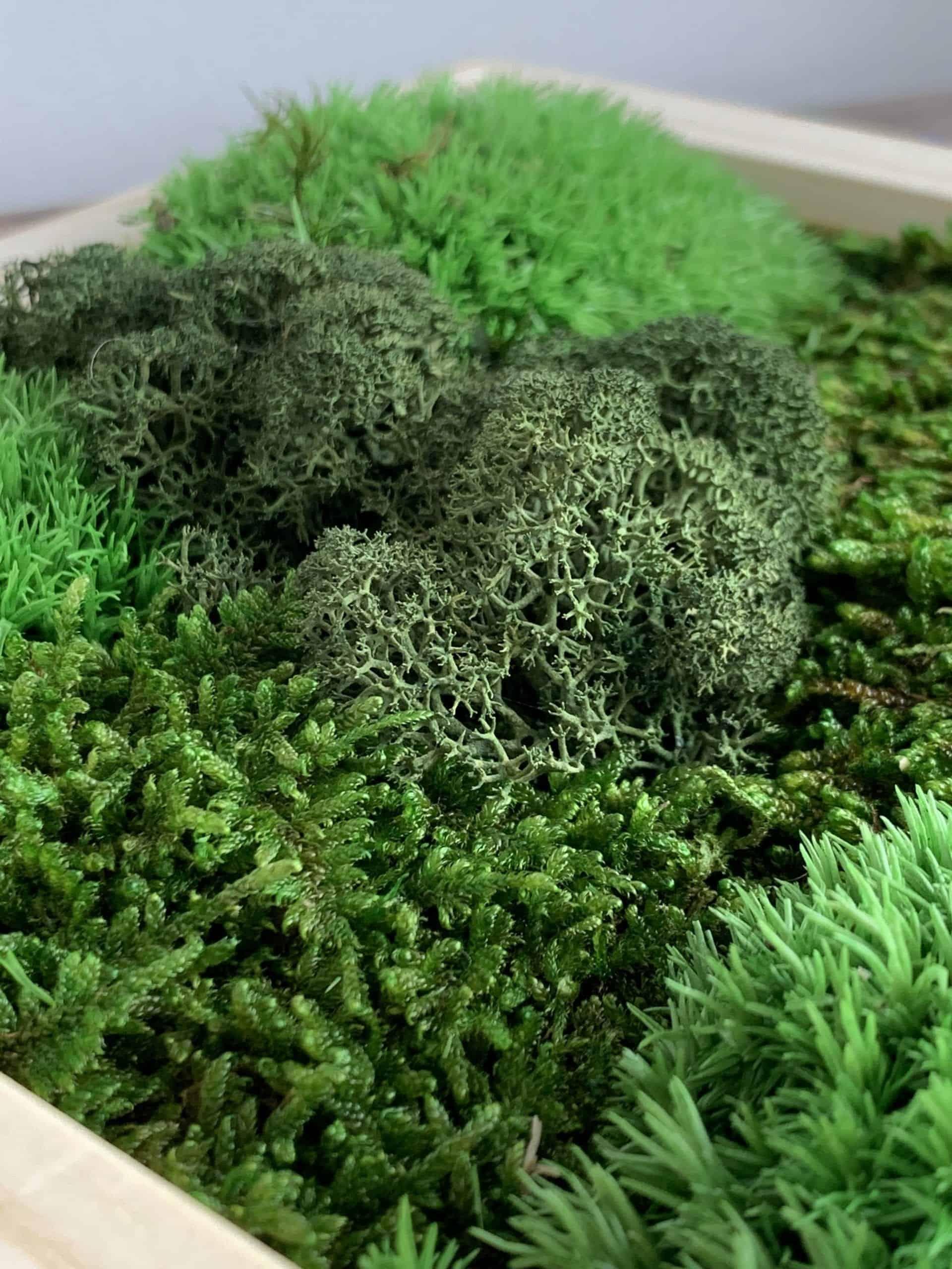 """Moss Garden - Natural Wood Frame -  7.5"""" x 7.5"""""""