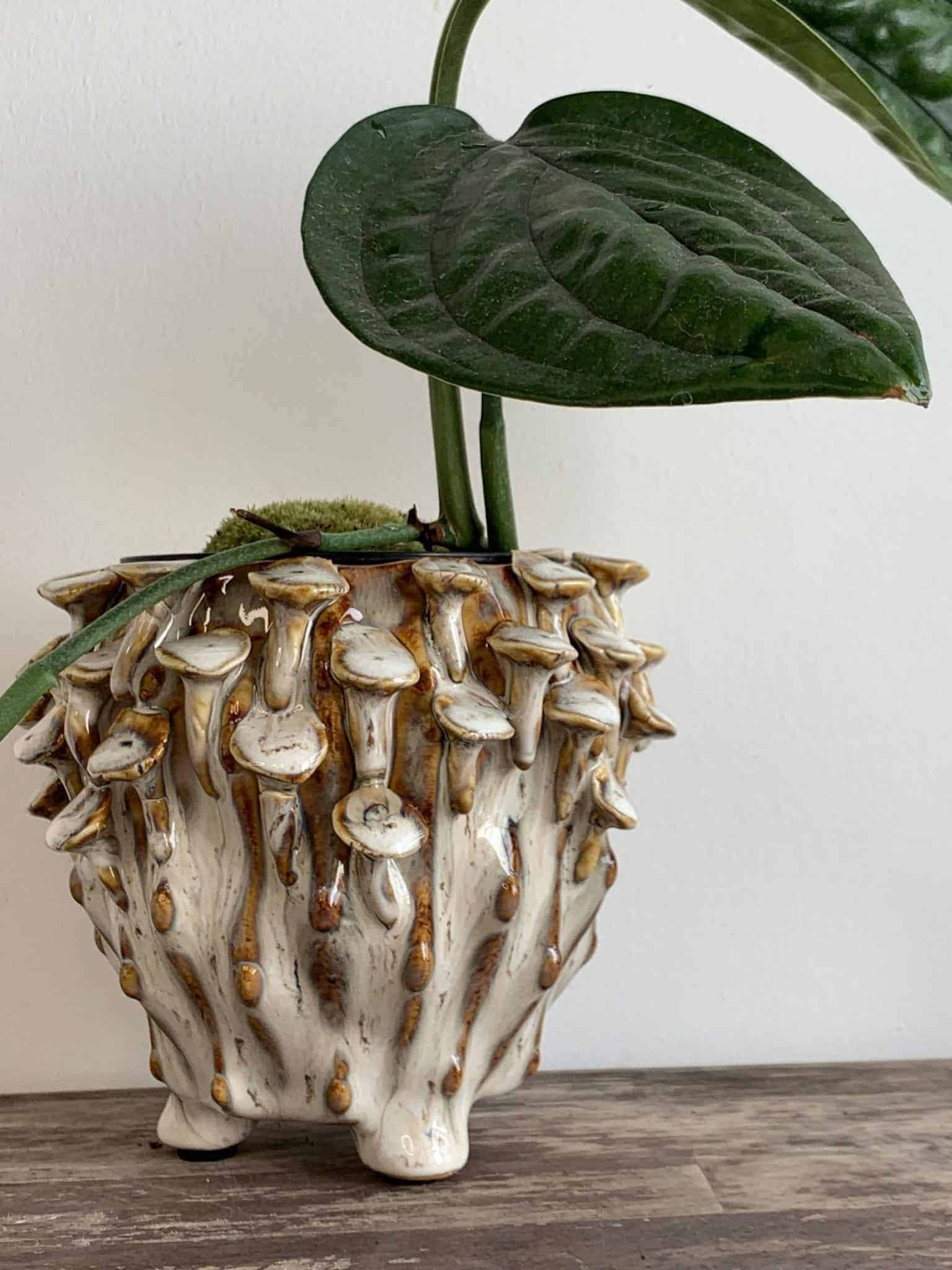 Brown 'toadstool' Planter for up to 8cm pots
