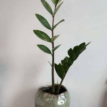 Savar Seafoam Planter for 11cm Pots Planters 11cm planter