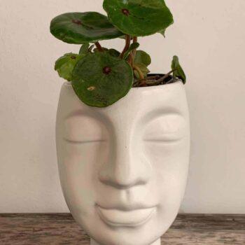 Wee White Head Planter for 5cm Pots Planters 5cm planter