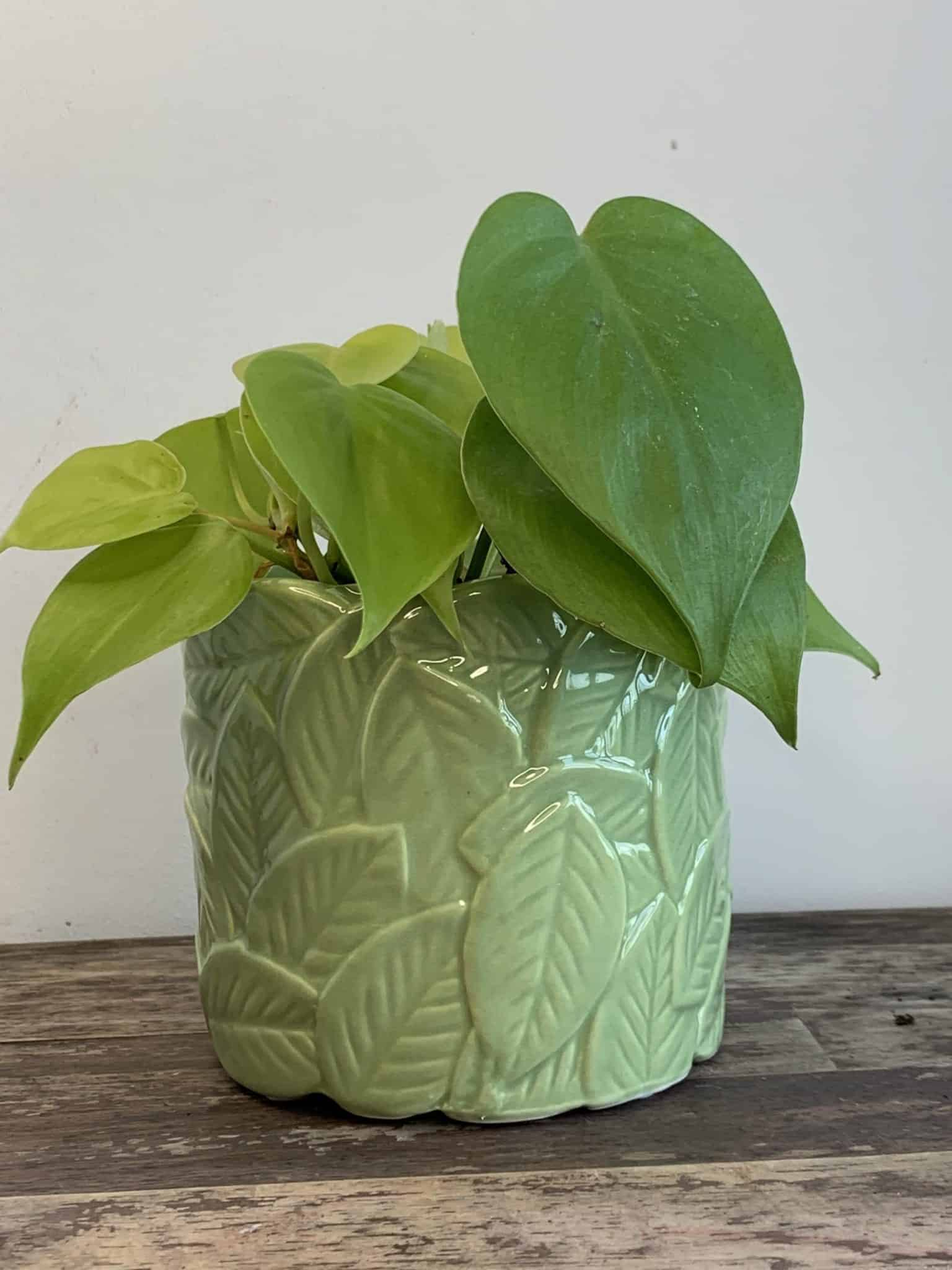 Leafy Planters in Light or Dark Green for pots up to 9cm - Light Green