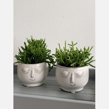 Rhipsalis Chain Cactus in little head planter Houseplants 6cm plant