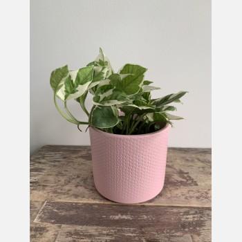 Pink planter with subtle dot design for up to 12cm pots Plant Accessories