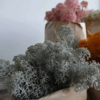 Preserved Reindeer Moss – Grey – 25g Made with Moss Green 2