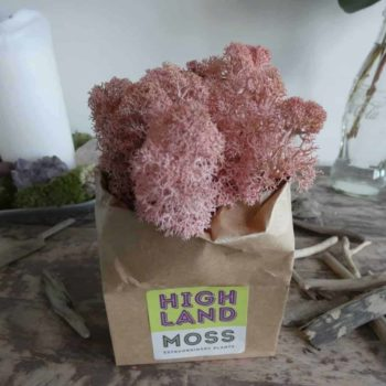 Preserved Reindeer Moss – Rose Pink Made with Moss Green