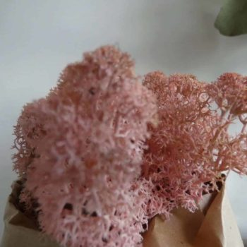 Preserved Reindeer Moss – Rose Pink Made with Moss Green 2