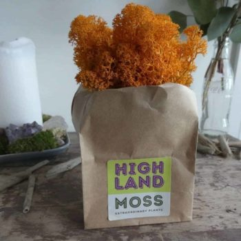 Preserved Reindeer Moss – Autumn Orange – 25g Made with Moss Green